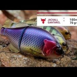 TG TACKLE TALK – JACKALL GANTAREL